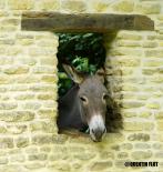 L'Âne Normand, De GouglonState