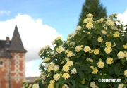 Belle Fleur de Pont L'Evêque, de Gram Riche